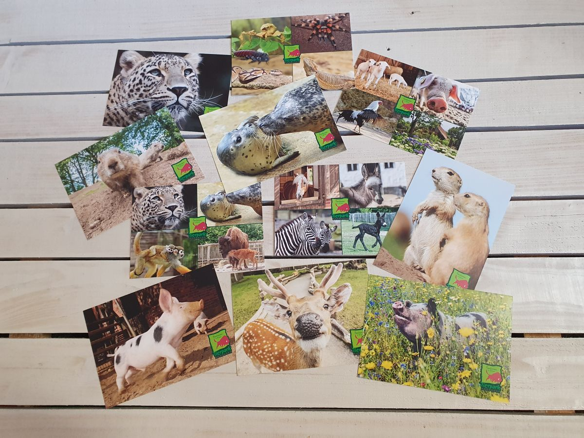 Tierpark-Postkarten